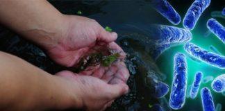 Зной способствует размножению убийц в воде: ученые не знают, что делать с плотоядными бактериями