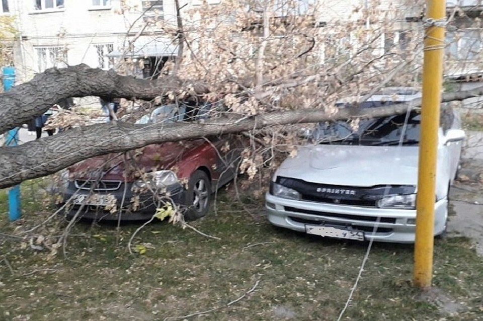Вырвало с корнем: под Новосибирском старый клен помял автомобили 1