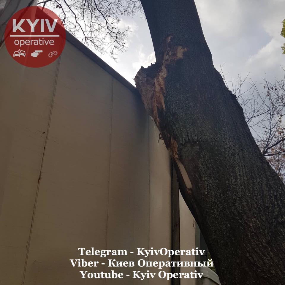 Грузовые автомобили регулярно получают повреждения из-за дерева на улице Смоленской в Киеве (фото) 4