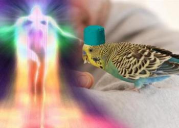 Как попугай влияет на здоровье хозяина?