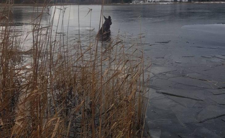 В Смолевичском районе лось провалился под лед: его доставали спасатели МЧС